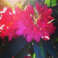 lilli9702_