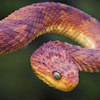 snakegoddesss