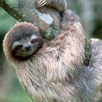 i_like_sloths