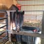 skittle_horses