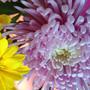 daisy117