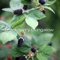 blackberrybungalow