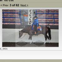 horsegal24579