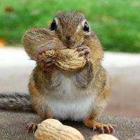 cookie_monsta