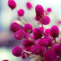 petalpress879