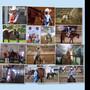 laurenhorses8