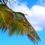 carlyfisher
